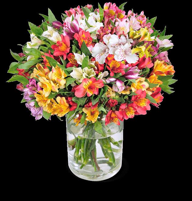 35 Inkalilien mit bis zu 300 Blüten