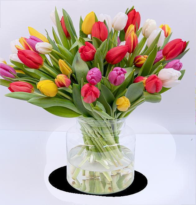 40 bunte Tulpen