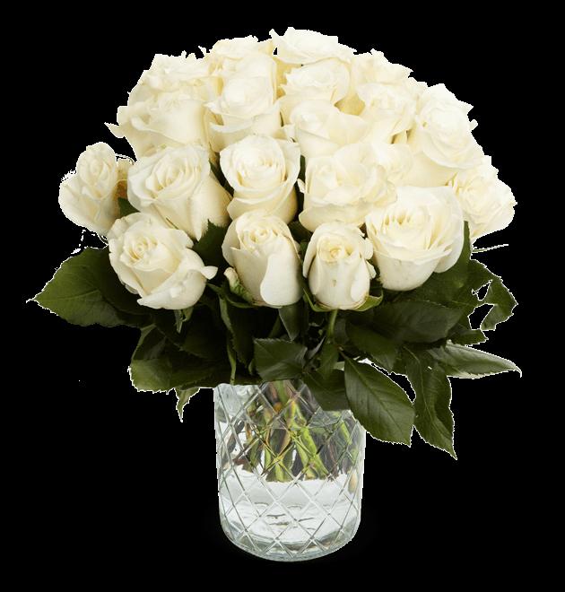 20 weiße Rosen (S)