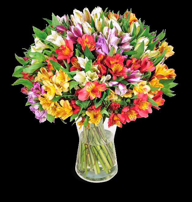 30 Inkalilien (bis zu 300 Blüten)
