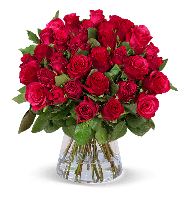 18 rote Rosen